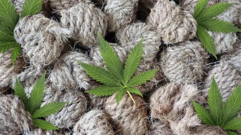 New uses for hemp seem to be popping up every day